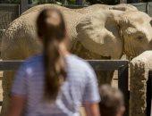 حديقة الحيوان ببرشلونة تستعد لإعادة الفتح..وألمانيا وبريطانيا تضحى بحيواناتها