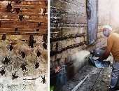 ييت الـ1000 خفاش بالخانكة.. رئيس المدينة: المنزل صادر له قرار هدم وأغلقنا جميع منافذه.. 60 وريثا للعقار وكثرة الورثة تؤجل قرار الهدم.. لا داعى للقلق سنقضى على الطائر المخيف.. ومحافظ القليوبية يأمر بإرسال لجنة