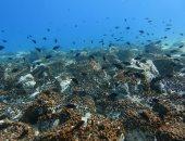 خففر السواحل الإيطالى: ازدهار الحياة البحرية أثناء العزل العام