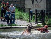 """مهمة صعبة.. رجال الإطفاء ينقذون """"بقرة"""" سقطت فى نهر ببريطانيا.. صور"""