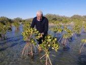 نقيب الزراعيين: بدء تنفيذ خطة للتوسع فى زراعة غابات المانجروف بالبحر الأحمر