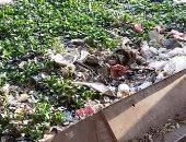 شكوى من تلوث ترعة بشارع مصنع الصابون بقرية المنية القديمة بالقليوبية