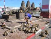 آلاف القرود تحتل شوارع مدينة تايلاندية وتتسبب فى رعب للسكان.. صور