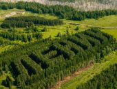 """مصور يلتقط صورا لأشجار تحمل اسم لينين فى سيبيريا بـ """"الدرون"""""""