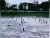 ظاهرة غريبة.. مئات الأسماك تقفز من بحيرة فى الصين وتفاجئ الزوار.. فيديو