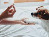 الكلاب يمكن أن تساعد طفلك على تعلم المهارات الاجتماعية والعاطفية