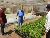 الزراعة: التوسع فى إنتاج شتلات التين والزيتون واللوز لدعم مزارعى مطروح