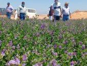 """""""أكساد"""": تنفيذ عدة مشروعات زراعية للحد من التصحر بمطروح والساحل الشمالى"""