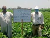 صور ... زراعة الشرقية : لجنة لتفقد الحقول الإرشادية للتوسع فى زراعة المحاصيل الزيتية