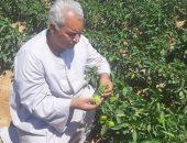 نقيب عام الفلاحين يكشف عن استهداف تصدير 5.5 مليون طن خضر وفاكهة