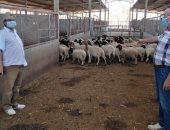 إكسترا نيوز تعرض فيديو حول المجمع 5 للإنتاج الحيواني بالنوبارية.. فيديو