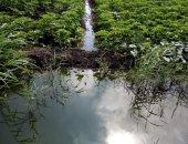 تعرض الأرض للبوار.. شكوى من سد مصارف مياه الرى فى قرية مخالى كفر الشيخ