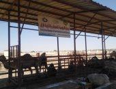الزراعة تتابع دور محطة رأس سدر لبحوث الصحراء لخدمة أهالى سيناء