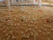 محافظ جنوب سيناء يتفقد مشروع المزارع الداجنة بطور سيناء