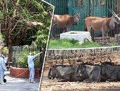 """""""صباح الخير يا مصر"""" يعرض تقريرا عن استعداد حدائق الحيوان لفتح أبوابها للجمهور"""