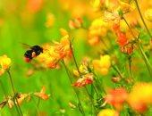 دراسة بريطانية: استخدام المبيدات الكيماوية يجب أن يقل للنصف بحلول 2030