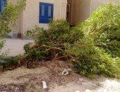 إزالة الأشجار الخضراء.. شكوى أهالى إسكان شباب المستقبل بالشروق