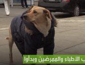 فيديو.. كلب وفي ينتظر صاحبه المصاب بكورونا خارج المستشفى