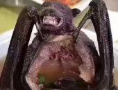 (أ.ش. أ) :علماء يعثرون على 3 فيروسات مماثلة لكوفيد-19 في خفافيش تعيش في كهوف بدولة لاوس