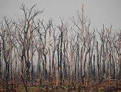 ارتفاع معدل إزالة الغابات فى الأمازون بنسبة 25% خلال عام