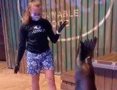 أسد البحر يرقص مع مدربة الأكورايوم فى أمريكا .. فيديو وصور