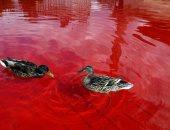 صور.. ناشطو حقوق الحيوان يصبغون مياه نافورتين فى لندن باللون الأحمر