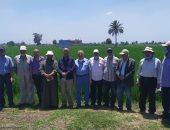 الزراعة تعلن تنفيذ 120 مدرسة حقلية لمحصول الأرز  والذرة بـ3 محافظات