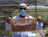 """نقيب الزراعيين: تطبيق أول نموذج لإنتاج أجود أنواع """"عسل المانجروف"""" بالبحر الأحمر"""