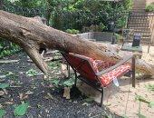 سيدة تنجو من الموت بعد النهوض عن كرسى سقطت عليه شجرة ضخمة.. فيديو