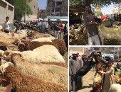 الزراعة: حملات تفتيشية على الشوادر ومنافذ بيع الأضاحى للتأكد من سلامتها