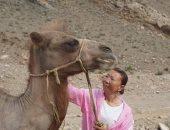 """جمل """"مخلص"""" يمشى 100 كيلومتر عبر الصحراء للعودة إلى مالكه السابق.. صور"""