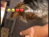 موقف طريف.. غيرة كلبة أحمد فهمي من زوجته هنا الزاهد بعد مسكه ليديها