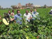 مدير عام الزراعة بالشرقية: تنظيم مدرسة حقلية للقطن لرفع الإنتاجية