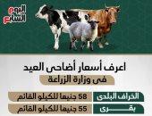 إنفو جراف.. اعرف أسعار أضاحى العيد فى وزارة الزراعة.. الخراف بـ58 جنيها للكيلو