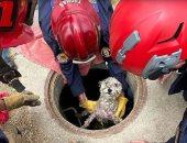 إنقاذ كلب صغير بعد سقوطه فى بالوعة بعد 3 أيام بولاية كاليفورنيا.. صور