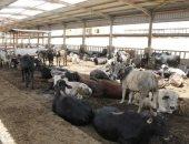محافظ بورسعيد: محطة تسمين الماشية الجديدة خطوة على طريق تنمية الثروة الحيوانية
