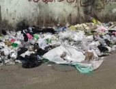 اضبط مخالفة.. انتشار القمامة بمدينة طنطا وسط غياب الأجهزة التنفيذية (صور)