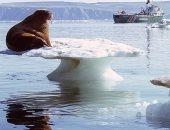"""جارديان: اختفاء 28 تريليون طن """"جليد"""" من سطح الأرض منذ عام 1994"""