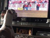 كلب يقلد الخيول أثناء مشاهدته إحدى المسابقات على التليفزيون.. فيديو وصور