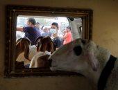 إقبال ضعيف على سوق الأضاحى فى الضفة الغربية بسبب الوضع الاقتصادى وكورونا