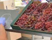 الحكومة: فتح أسواق غير تقليدية لتصدير العنب والموالح لجنوب شرق آسيا وكندا