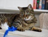 كيف يتم تشخيص حساسية القطط وما علاجها؟