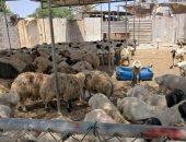 """أضحية العيد بالبحرين: حجز """"الخروف"""" بالهاتف واستلامه بالسيارة لتجنب التجمعات"""