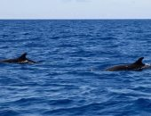 فيديو.. الحيتان الحدباء تنعش السياحة فى كوستاريكا