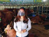 الأضحية أونلاين.. انتعاش مبيعات المواشى عبر الإنترنت بمزارع إندونيسيا