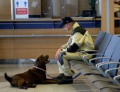 فريق إنقاذ فى مهمة رسمية.. كلاب من التشيك للبحث عن ضحايا انفجار بيروت