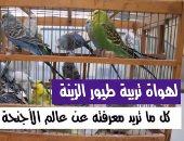 تربية طيور الزينة.. كل ما تريد معرفته عن عالم الأجنحة الملونة