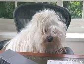 """فيديو.. مارك زوكربيرج ممازحا كلبه """"بيست"""": هل تعمل من المنزل؟"""