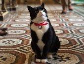 """تقاعد قط الخارجية البريطانية """"كبير صائدى الفئران"""" عن العمل بعد 4 سنوات خدمة"""