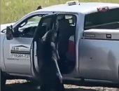 دب يقتحم سيارة ويسرق الطعام بولاية كولورادو الأمريكية.. فيديو وصور